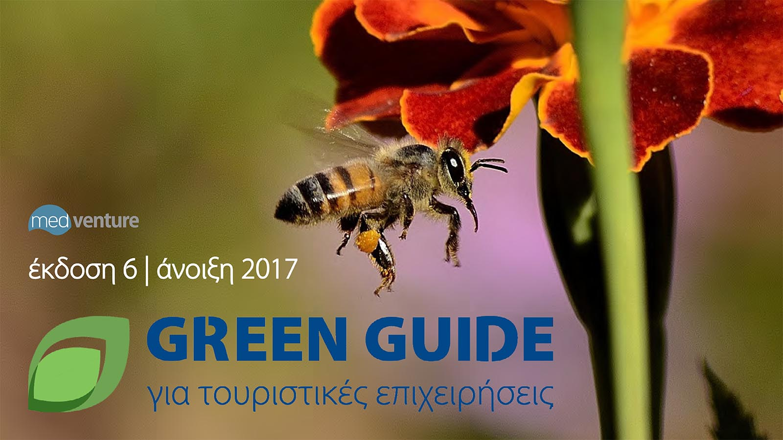 Green Guide Issue 6